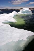 Pack ice blocks the St Anthony Harbour in Newfoundland, Canada and puts a stop to all commercial fishing but it makes an excellent picture for tourists to this area.