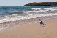 A seagull leaves his footprints behind as he walks along the sandy beach in Pancake Bay Provincial Park in Ontario, Canada.