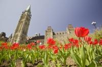 The parliament buildings of Ottawa in Ontario are surrounded by beautiful beds of tulips during the annual Ottawa Tulip Festival.