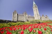 Sitting atop a hill in the city of Ottawa are the Parliament buildings of Canada surrounded by beautiful tulip blooms during the Tulip Festival.