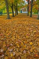 A path barely visible, covered by golden leaves during fall, leads to the Sharon Temple in the town of Sharon, Ontario.