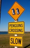This penguin crossing sign is not a joke, so while traveling in Oamaru, Otago on the South Island of New Zealand, please be aware of any penguins.
