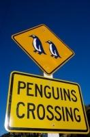 A Penguin crossing sign along the road in Oamaru, Otago on the South Island of New Zealand.