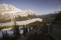 Frozen Tourist Attraction Winter Peyto Lake