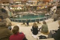 The Sea Lion Rock is one of the many attractions that you will see at the West Edmonton Mall, Edmonton, Alberta, Canada. The daily performances are interactive as well as educational as you learn about these astonishing animals.