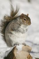 Picture of a cute squirrel on a stumb