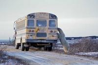 A large polar bear checks out the passengers inside a tour bus during a visit to the icy tundra in Churchill, Manitoba, Canada.