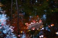 Reflections of the Autumn colored trees in a pond of the Riviere du Diable in Parc national du Mont Tremblant in Quebec, Canada.