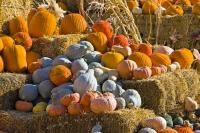 During the fall months in the town of Keremeos, British Columbia many of the produce stands make a colourful pumpkin pile outside their stalls.