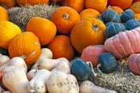 Colorful selections of both pumpkin and squash are on display for purchase at this produce stall in the town of Keremeos in the Okanagan-Similkameen Region of British Columbia.