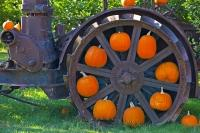 This orange pumpkin wheel display is part of the fall atmosphere created at a produce stall in Keremos, which is in the Okanagan-Similkameen Region of British Columbia, Canada. The orange of these pumpkins stand out against the old farming wheels.