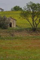 A quaint old shed sits at the edge of a field of wildflowers near the village of Riez in Provence. France.
