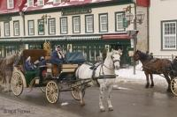 Horse Photographs, Horse drawn buggies in Old Quebec