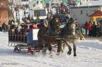 Horses in Snow, Sleigh Rides in Quebec