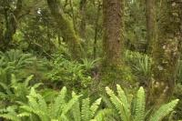 New Zealand Fiordland Rain Forest Pictures
