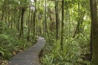Photo of a Rainforest Biome found in the South Pacific in New Zealand