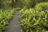 A variety of Rainforest Plants thrive in Fiordland National Park a UNESCO World Heritage Site