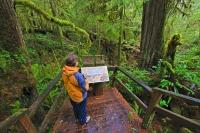This picture shows a tourist reading an interpretative sign while exploring the Rainforest Trail in Pacific Rim National Park, Vancouver Island, British Columbia.