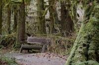 The Hoh Rainforest area on the Olympic Peninsula of Washington has an information centre which provides trail maps and helpful forest information.