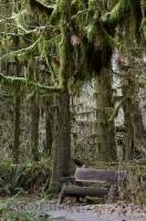 A park bench in the Hoh Rainforest in the Olympic National Park of Washington, USA.