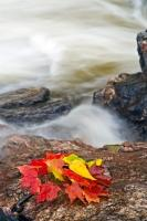 A small pile of red and yellow leaves indicates that fall has arrived in Lake Superior Provincial Park, Ontario at the waterfall along Sand River.