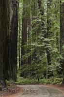 A popular national park in California with giant Redwood trees is the Humboldt Redwoods State Park.