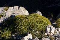 A lovely rock plant softens the rugged terrain of the Gorges du Verdon in Provence, France in Europe as the sunlight glistens of the landscape.
