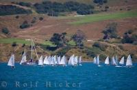 Sailboat Regatta Akaroa Harbour New Zealand