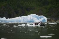 Tourists examine big pieces of ice that have calved off the South Sawyer Glacier in the Tracy Arm - Fords Terror Wilderness Area near Juneau, Alaska.