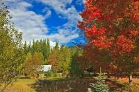 In this scenic fall picture taken in the Central Kootenay region in British Columbia, Canada, the colours on the trees are so vibrant they are really breathtaking. A small shed or barn can also be seen in the distance.
