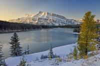 Photo of a scenic winter landscape around Two Jack Lake in Banff National Park in the Canadian Rocky Mountains. The yellow leaves of a tree contrast against the white landscape of scenic Banff Park - caught between the seasons of fall and winter.