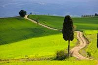 A gravel road winds through the scenic country landscape of the Tuscany near the town of Pienza in Italy.