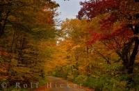 Scenic Road Picture Autumn Leaves