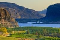 A beautiful scenic view overlooking Blue Mountain Vineyard towards Vaseux Lake and the surrounding rugged landscape of the Okanagan Similkameen region.