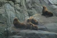 Sea Lion Pictures
