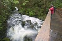 Photo of hikers looking over the river in Settlers Cove in Ketchikan