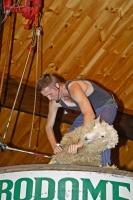 A trained sheep shearer gives a shearing demonstration at the Agrodome in Rotorua on the North Island of New Zealand.