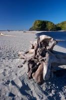 Large pieces of driftwood adorn the beach at Ship Creek along the Glacier Highway on the South Island of New Zealand.