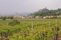 Soave Castle on a hill above the vineyards of Soave in the Veneto region of Verona, Italy in Europe.
