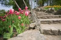 Situated in the Royal Botanical Gardens of Hamilton, Ontario is an established area called the Rock Garden which features more beautiful floral displays.