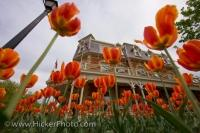 In the garden outside the Prince of Wales Hotel in Ontario, Canada, Spring has arrived as the blossoming tulips adorn the entranceway to this elegant accommodation location.