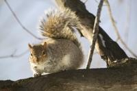 Squirrel Pictures Animal in Tree