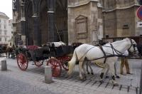 Horse buggies wait outside the Stephansdom Cathedral in Vienna, Austria for any tourists wanting to see the city with a coachman.