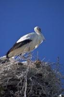 Stork Bird Nest Camargue
