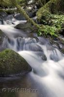 A photo of a stream in the Queets River Area in the Olympic National Park of Washington, USA.
