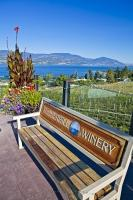 A park bench provides the means to sit and enjoy the views and ambience of the organic vineyards of the Summerhill Pyramid Winery in Kelowna, Okanagan, BC, Canada.