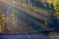Golden sunrays filter through the forest in this picture of the beautiful scenery near Virgin Falls on Vancouver Island in British Columbia. This is located in a transition area of the Clayoquot Sound UNESCO Biosphere Reserve.