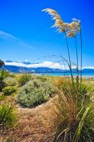 A small clump of toetoe with three plumes graces the beautiful beach of Kaikoura on the South Island of New Zealand.