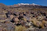 The volcanic plateau of Mt Ruapehu stands in the background near Whakapapa in Tongariro National Park on the North Island of NZ.