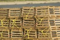 Wooden lobster traps are used to catch Atlantic Lobsters along the coast of Newfoundland, Canada.